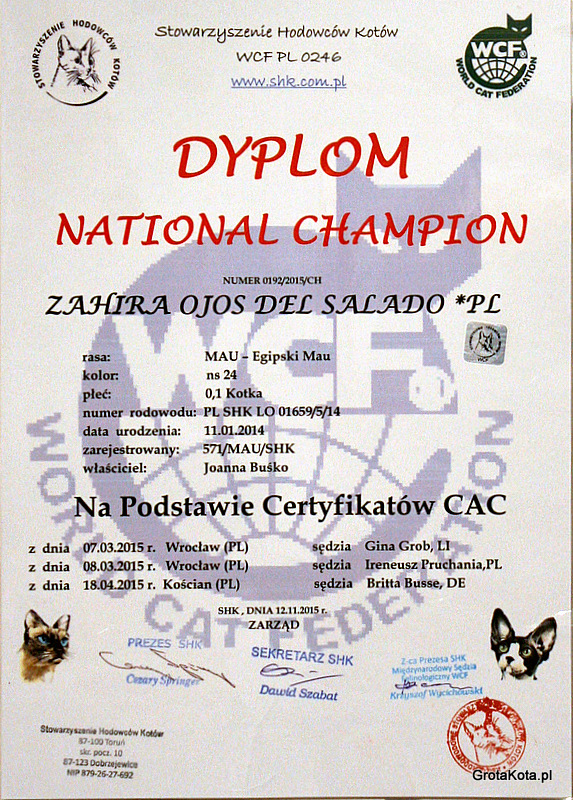 Zahira - national champion kot egipski mau